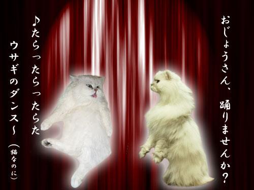 白猫舞踏会--.jpg