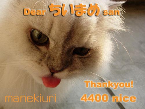 manekiuri-4400.jpg