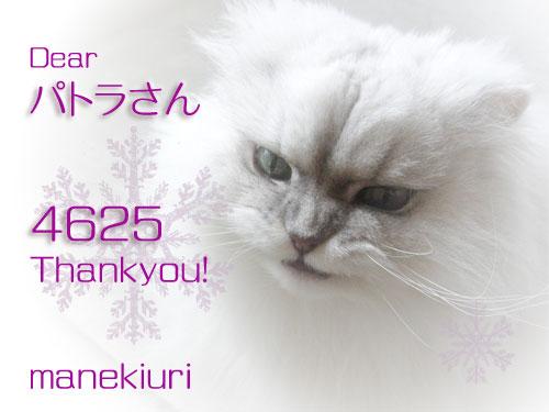 manekiuri-4625.jpg