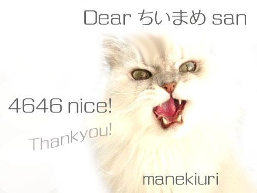 manekiuri-4646.jpg