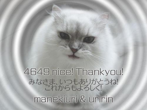 manekiuri-4649.jpg